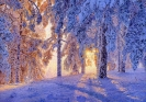 Winter dawn 70х100