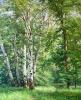 Тропинка в лес 80x65