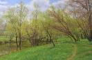 Spring. Gorky Park 40x60