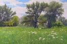 Meadow 40x60