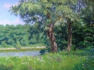 Meadow with willows 60x80